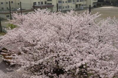 🌸お花見🍱No.1