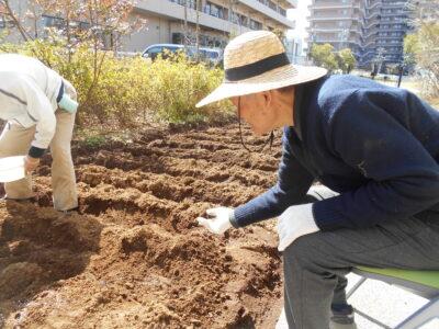ジャガイモの植え付け作業を行いました!!!!!