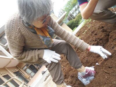 サツマイモの植え付け作業を行いました!!!!!